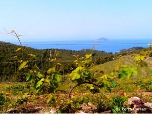 Θέα από αμπελώνες στην Χαλκιδική