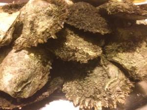 ωμά όστρακα στρείδια, καλόγνωμες, πετροσωλήνες